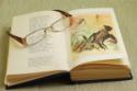 Tipps zum Lesen lernen fremder Schriften