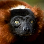 Madagassisch